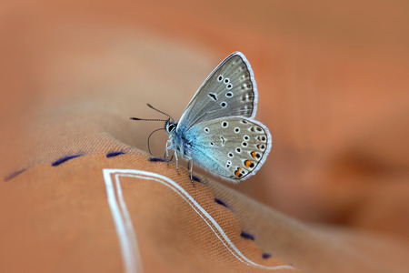 Beautiful butterfly sitting on beige fabric background Stock Photo