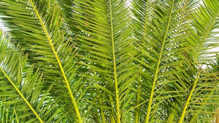 Illustration of palm branches closeup nature background Stock fotó