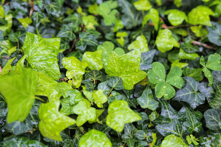 Close-up of different wet plants with water drops, natural bright green background