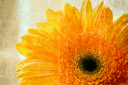 Close-up of beautiful orange gerber flowern with abstract texture