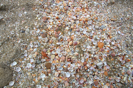 Lots of different dead shellfishes on the pebbles sea beach, natural close-up background Imagens