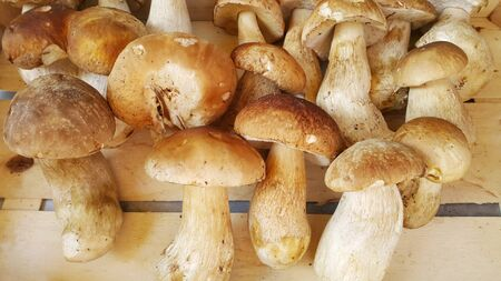 Fresh forest porcini mushrooms or cep mushrooms on a store counter close-up Stock Photo
