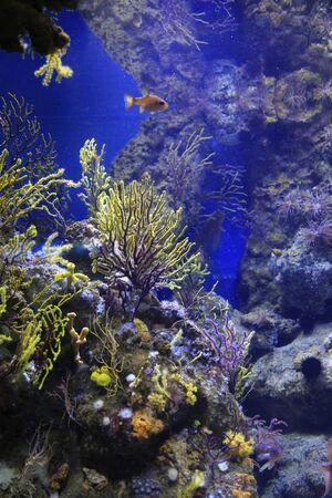 Beautiful underwater inhabitants in the aquarium
