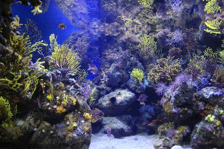 Beautiful colorful marine animals in the aquarium
