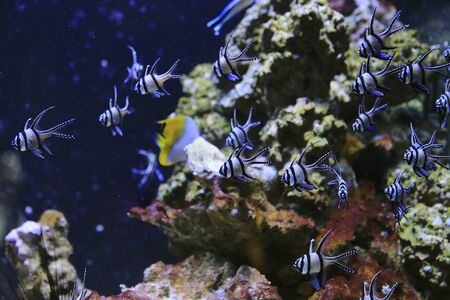 School of beautifyul fish and underwater marine life in the aquarium