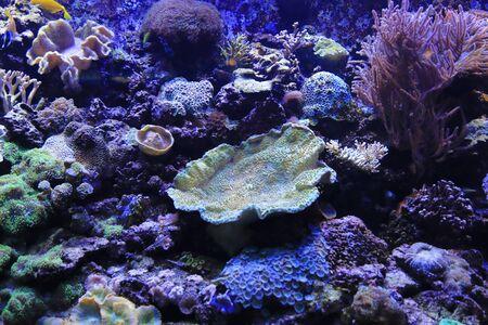 Beautiful colorful marine life in the aquarium Stockfoto