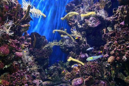 Beautiful colorful underwater marine life in the aquarium Stockfoto