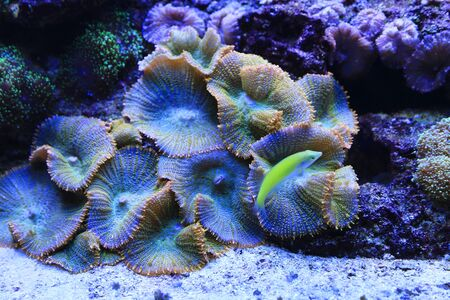 Beautiful colorful underwater marine life in the aquarium 版權商用圖片