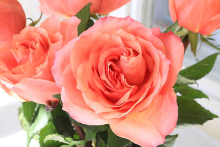 Close-up of beautiful bouquet of delicate coral roses Standard-Bild