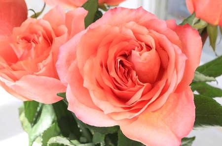 Beautiful bouquet of delicate roses, close-up Standard-Bild