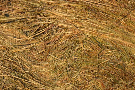 Close up of hay natural background texture