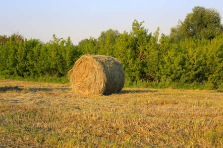 A lone bale of hay lies on a field against trees and sky Standard-Bild