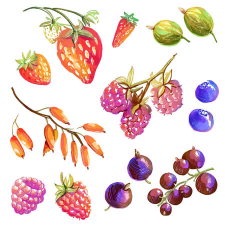 Collection with tasty isolated hand drawn berries - strawberry, wild strawberry, currant, raspberry, barberry, gooseberry, blueberry