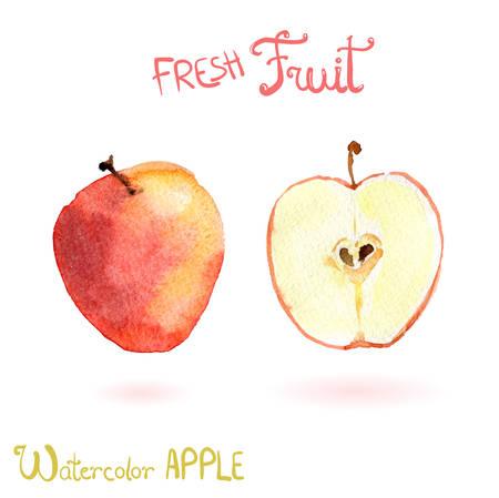 Bright vector watercolor fruit apple Illusztráció