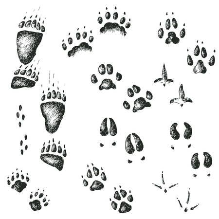 wolverine: Set of walking wild wood animal and bird tracks
