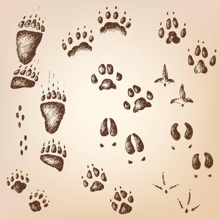 wolverine: Vector set of walking wild wood animal and bird tracks Illustration