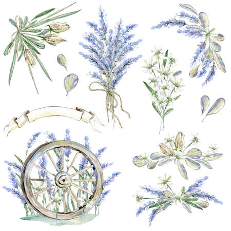Set of hand drawn watercolor clipart. Provence atmosphere, laven Banque d'images - 97781209