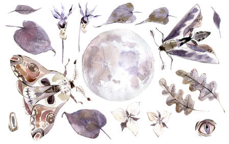 Watercolor mystical collection. Moon, moths, leaves and plants. 写真素材