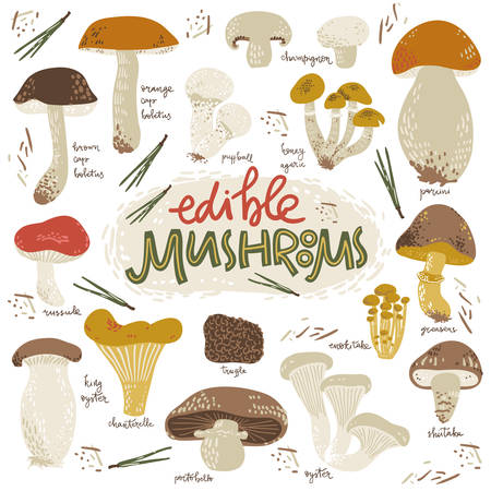 Edible musrooms. Doodle collection with signatures. Simple graphic style.