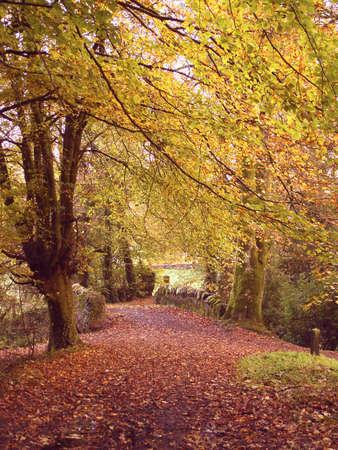 Autumn Path To A Bridge