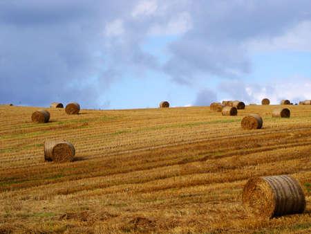 Hayfield, County Down, Ireland                                Stock Photo