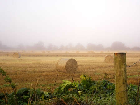 Early Morning in the Hay Field