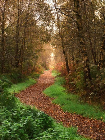 Woodland Path in Fall Stock Photo