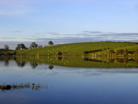 Reflections of sheep in the early morning lake                                Stock Photo