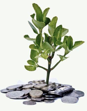 Money Tree Stock Photo - 7019234