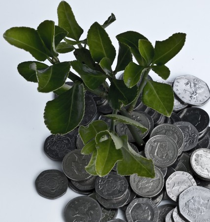 Money tree  Recovery Plant Stock Photo - 16686832