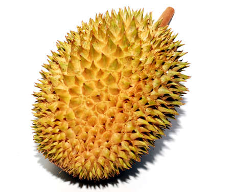 A Malaysian Durian fruit image on the white background