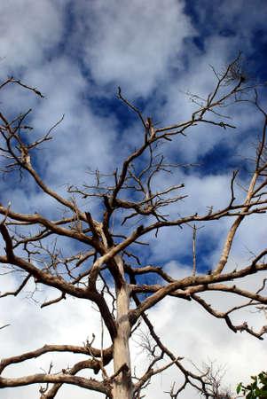 albero secco: bella immagine albero secco a Perak, Malesia