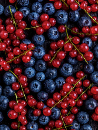 Sweet cranberries and bunches of red currant