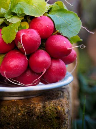 Crispy red radishes