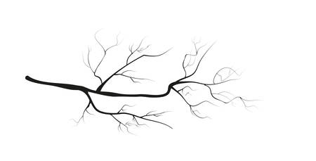 vector branches on white background. Illustration