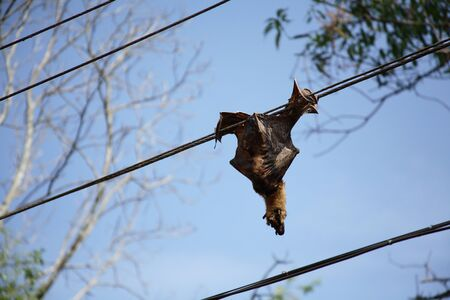 Bat died by electric shock,Kerala,India