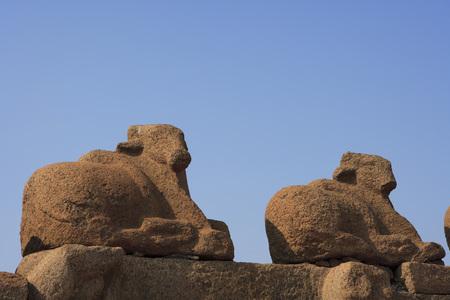 pallava: Nandi statues at Shore temple complex built during the reign of Pallava King Rajasimha (c. 700 - 728),Mahabalipuram,District Chengalpattu,Tamil Nadu,India UNESCO World Heritage Site
