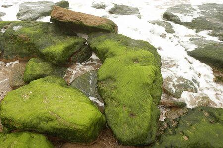 Green moss on stone Stok Fotoğraf