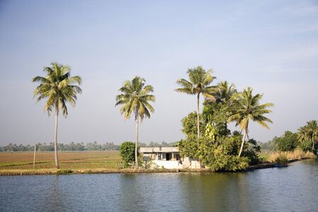 Coconut trees near at Backwaters,Alleppey,Kerala,India