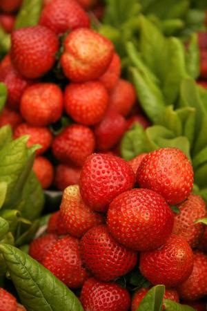 Indian fruits,Red strawberries specially available at Mahabaleshwar,Maharashtra,India