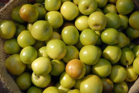 Ber fruit,Mandvi,Kutch,Gujarat,India