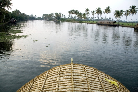 Luxury houseboats and coconut trees in Backwaters,Alleppey,Kerala,India