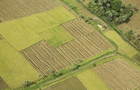 Aerial view of tilled and cultivated field,Andhra Pradesh,India Stok Fotoğraf