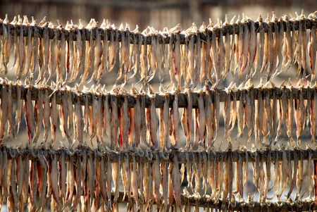 Dried fish,Jakhau,Kutch,Gujarat,India