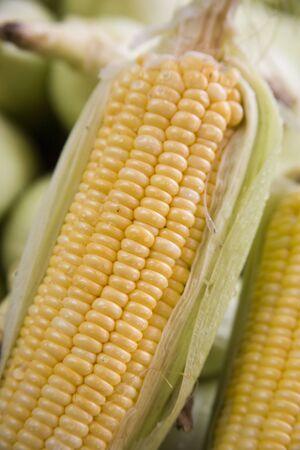 作物や自然食品、甘い黄金色のとうもろこし Bhutta マッキー魔界トウモロコシ トウモロコシ、アクセス、マハラシュトラ州、インド