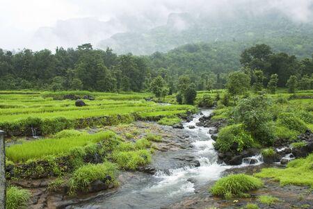 Malshej landscape in monsoon rivulets running down merging into river Bhima,Malshej ghat,Maharashtra,India