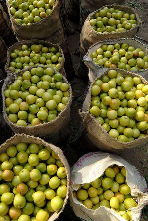 Bags full of Ber,Kutch,Gujarat,India Stock Photo