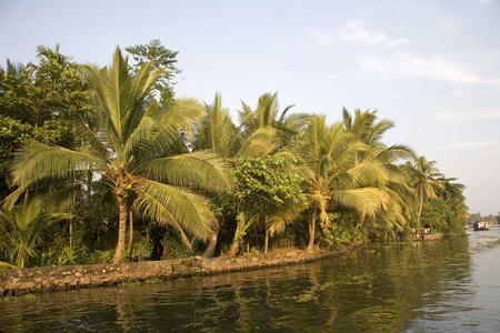 Kokosbomen in de buurt van Backwaters, Alleppey, Kerala, India