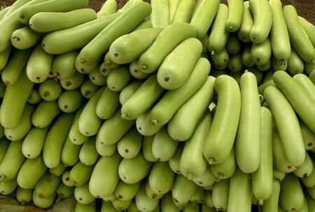 Vegetable,bottle guard,India Stock Photo