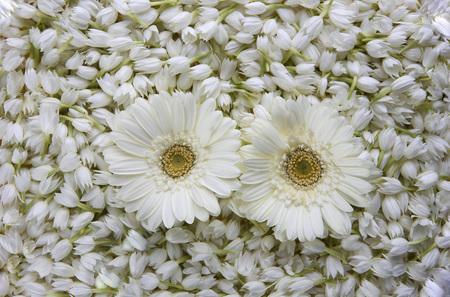 Jasmine sambak flowers mogra with gerbera